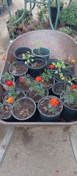 Yard Sale Plants